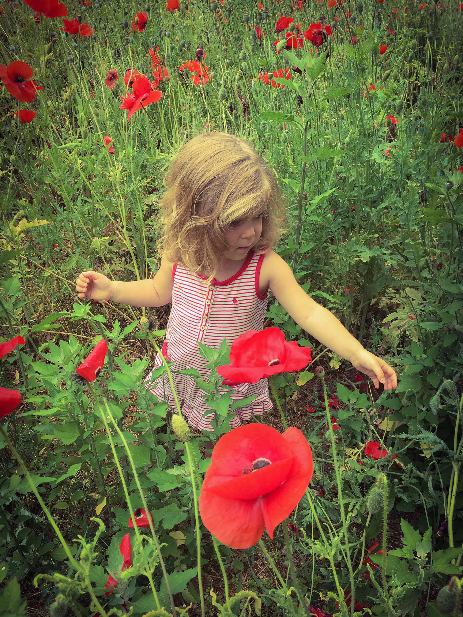 brook poppy 3.jpg