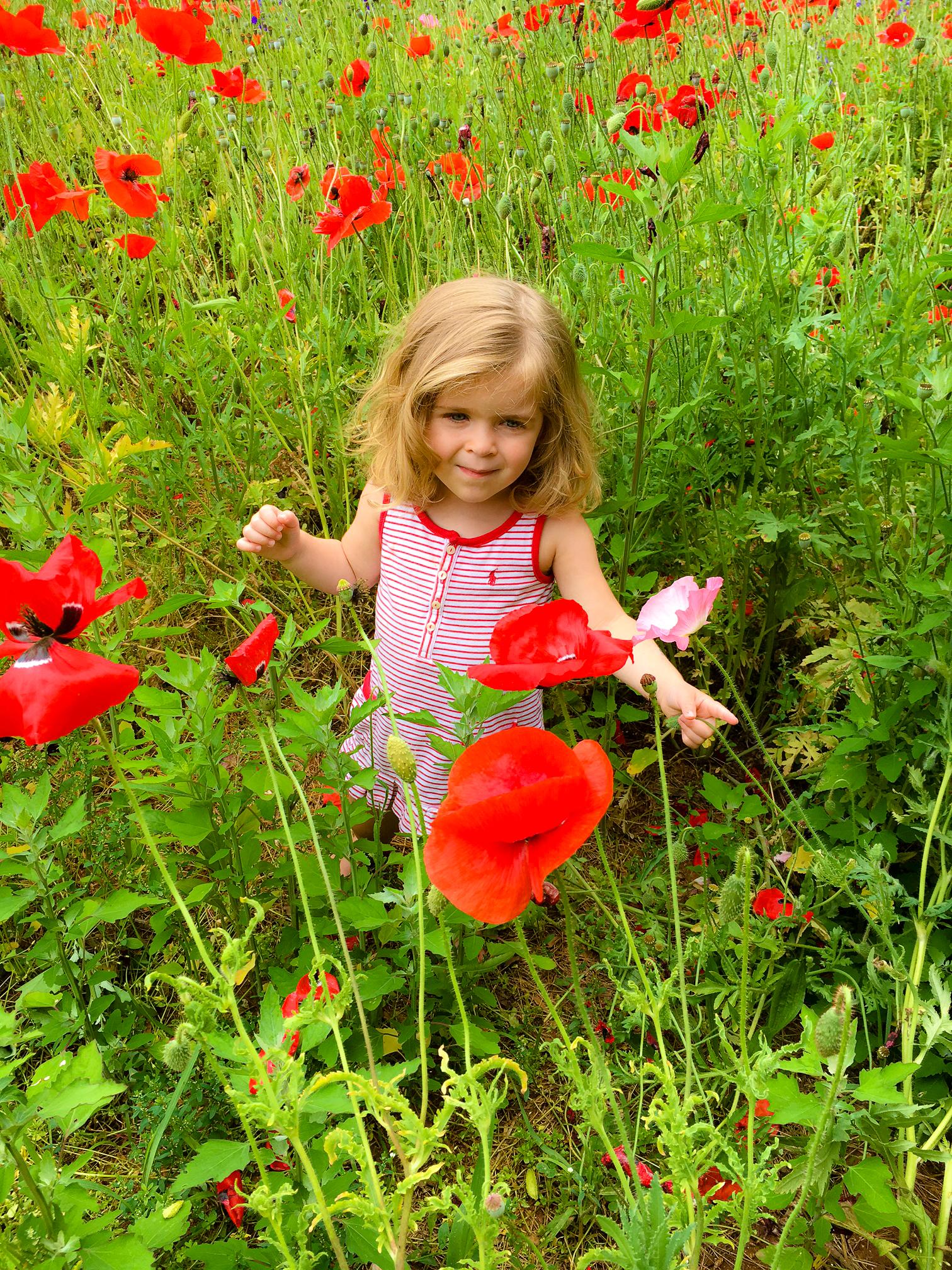 brook poppy 4.jpg