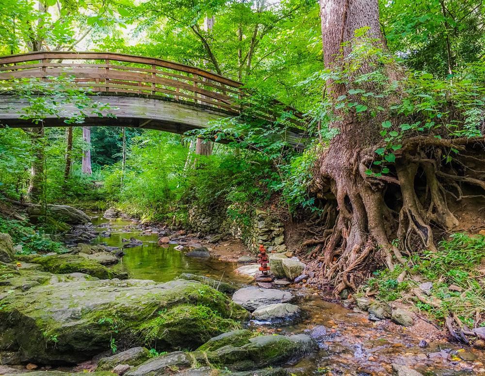 botanical bridge process web-2.jpg