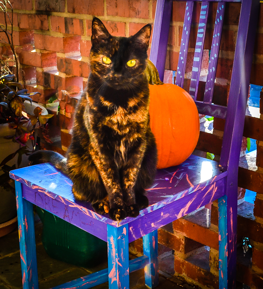 pumpkin kitty vinette.jpg