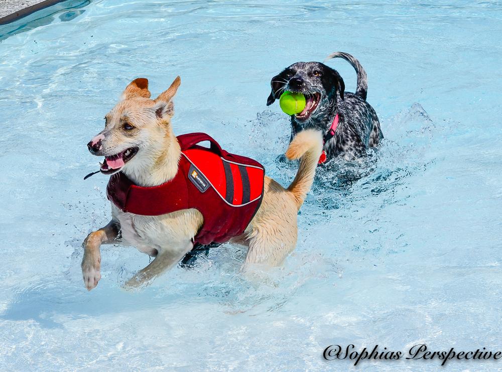 The Dog Swim