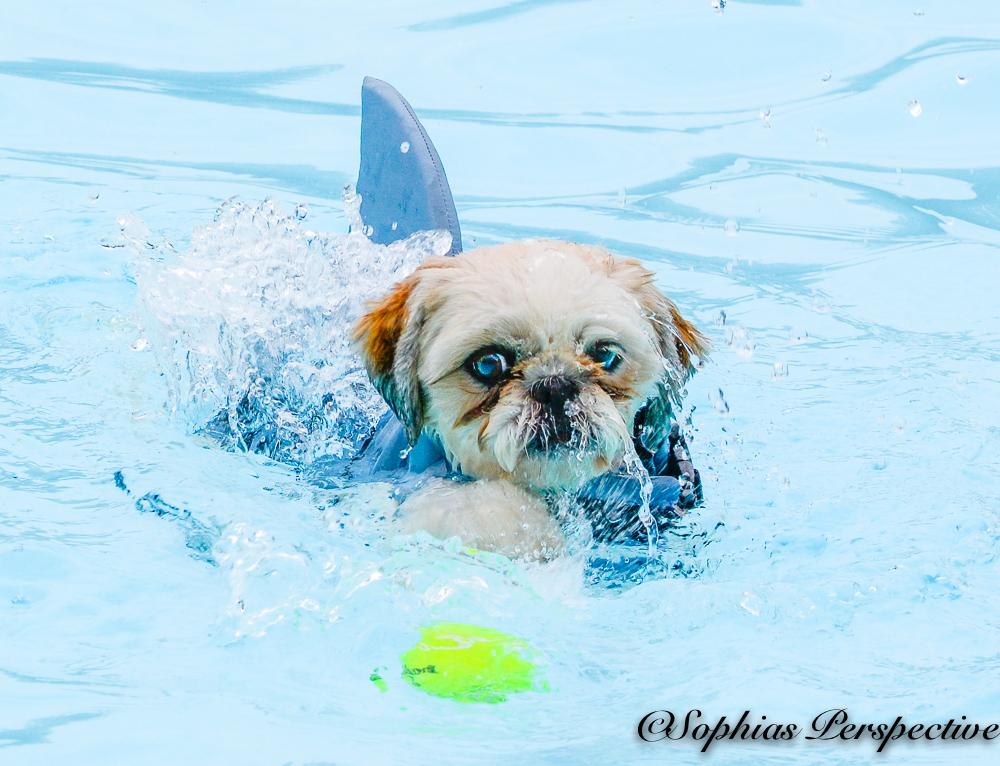 shark solo.jpg