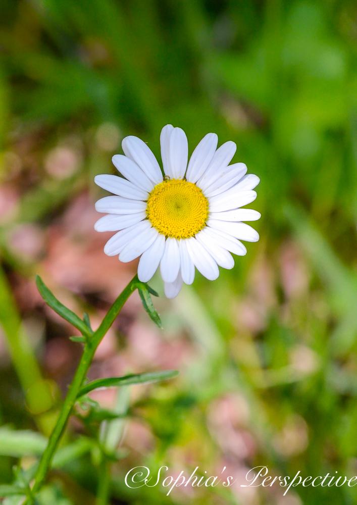 daisy 1 fb.jpg