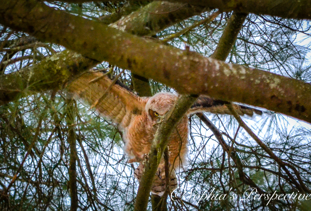 owl baby fb.jpg