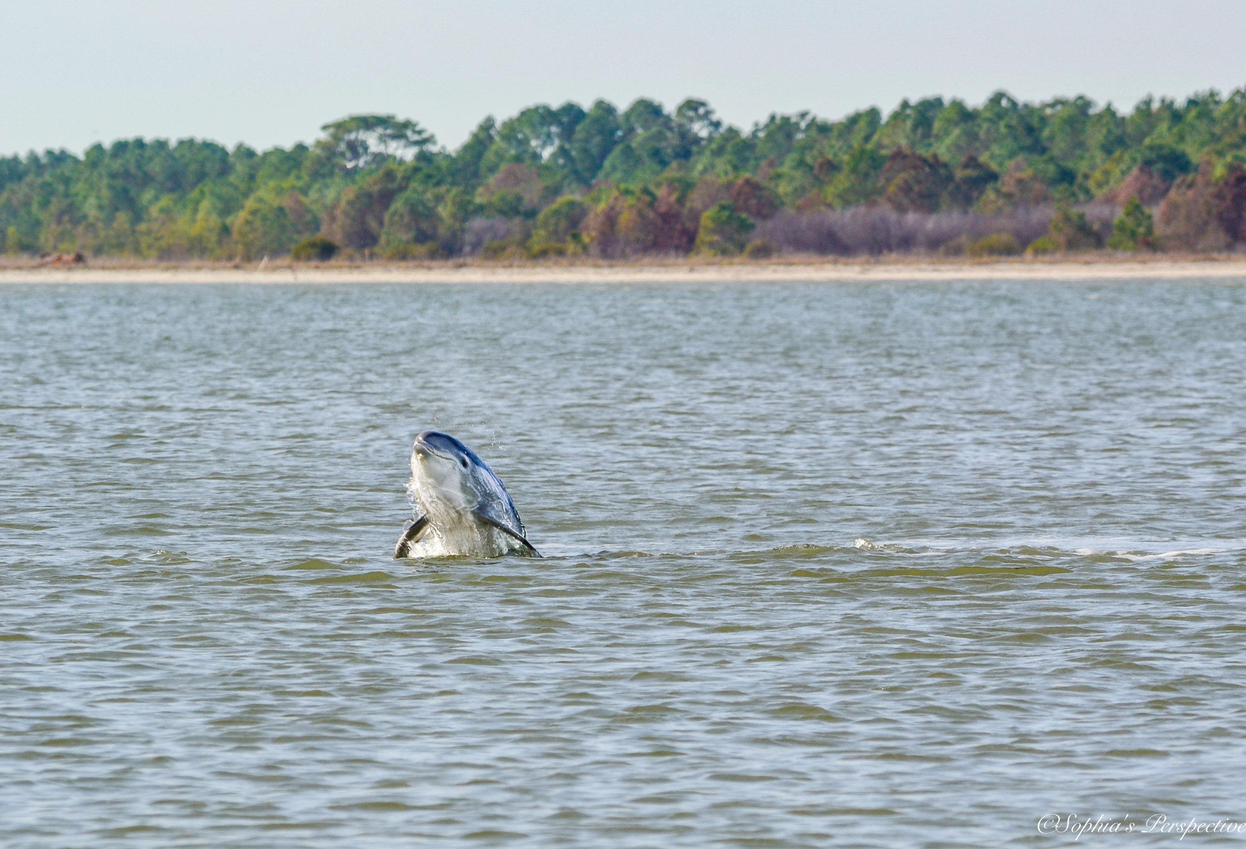 dolphin single .jpg
