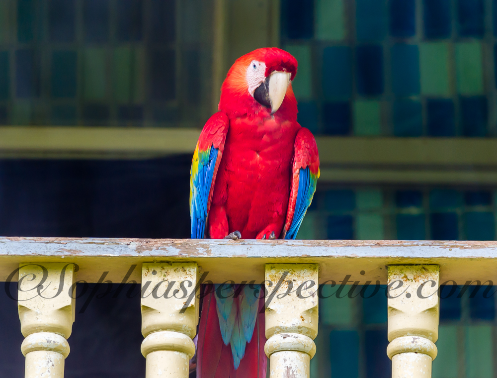 macaw on railing fb.jpg
