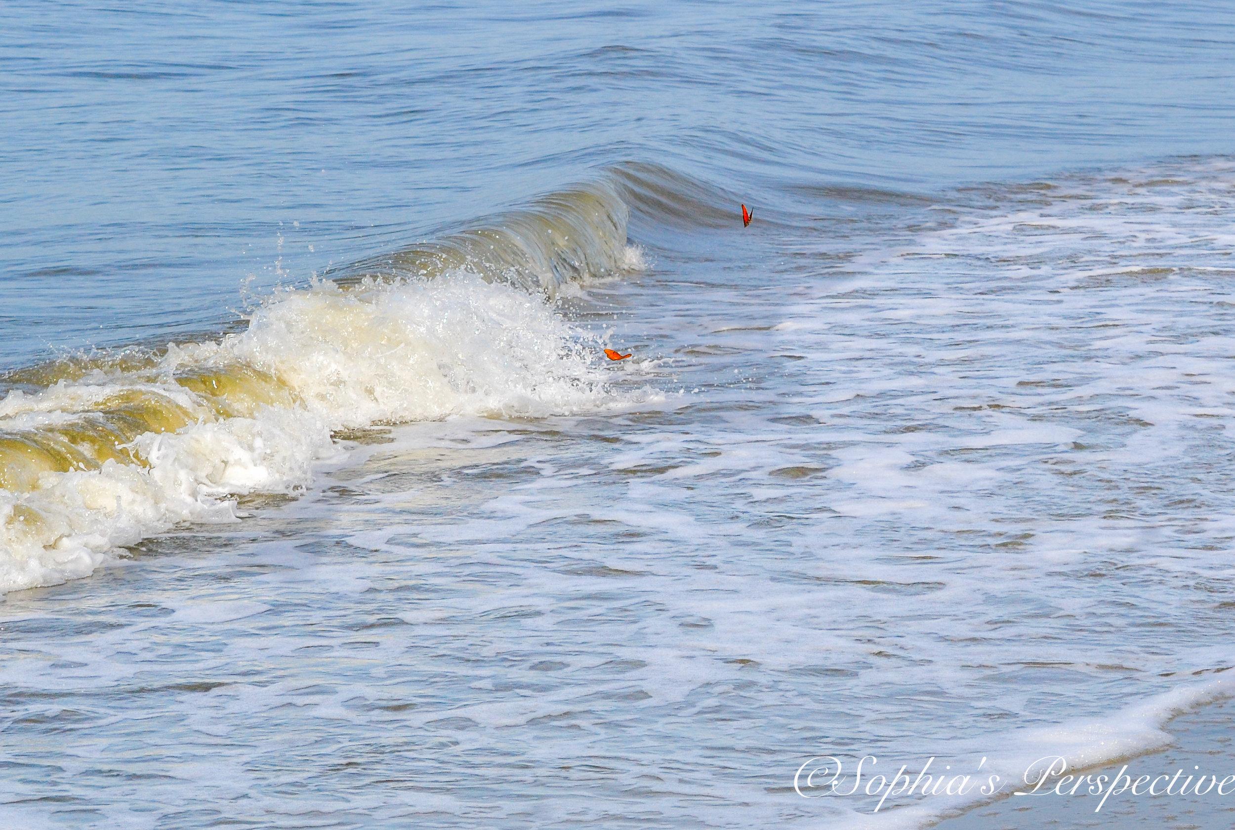 butterfly surfing 2.jpg
