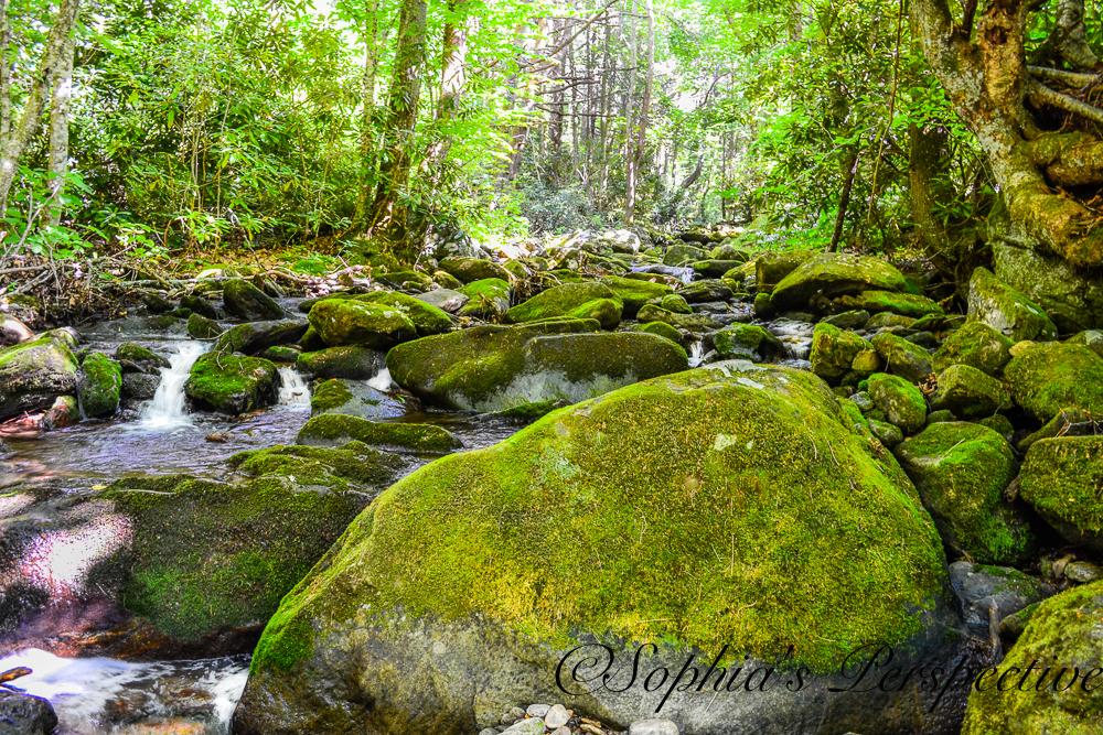 moss rocks river bed fb.jpg
