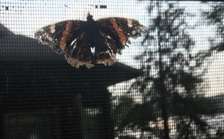 This Butterfly was fluttering over my shoulder as I wrote this...