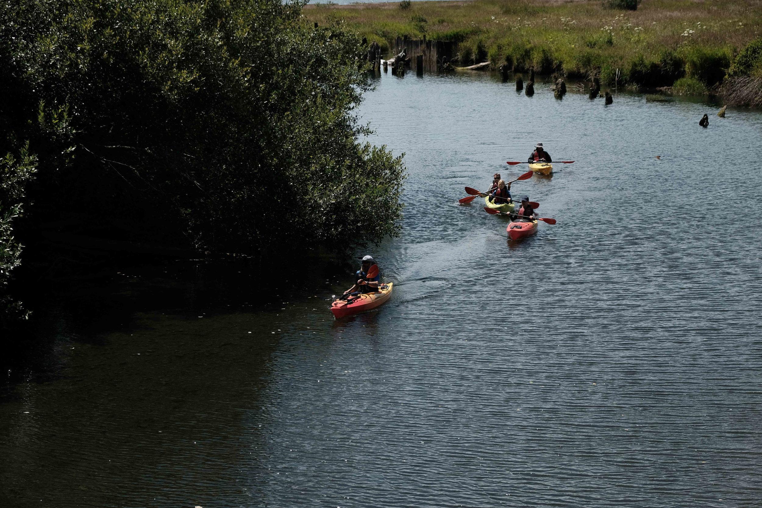 Kayakers in Estuary.JPG