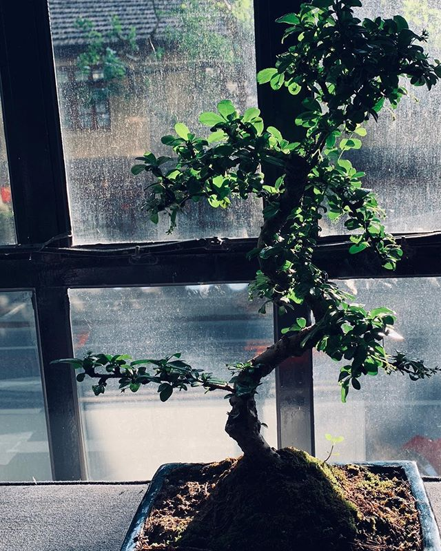 Say hi to my Bonsai. His name is Bon Jovi.