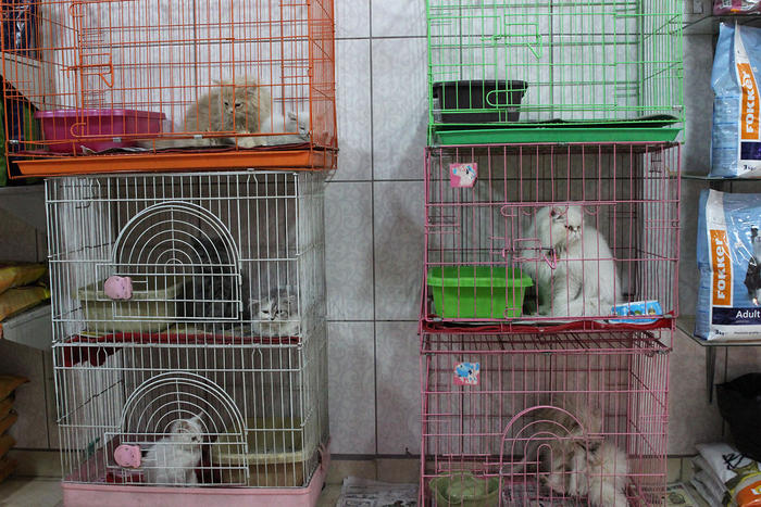 Cats are piled into tiny cages in one of Amman's many downtown pet stores.