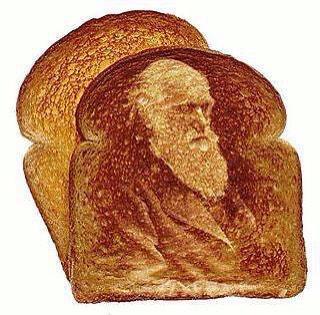 Darwin's face  miraculously appears on toast!