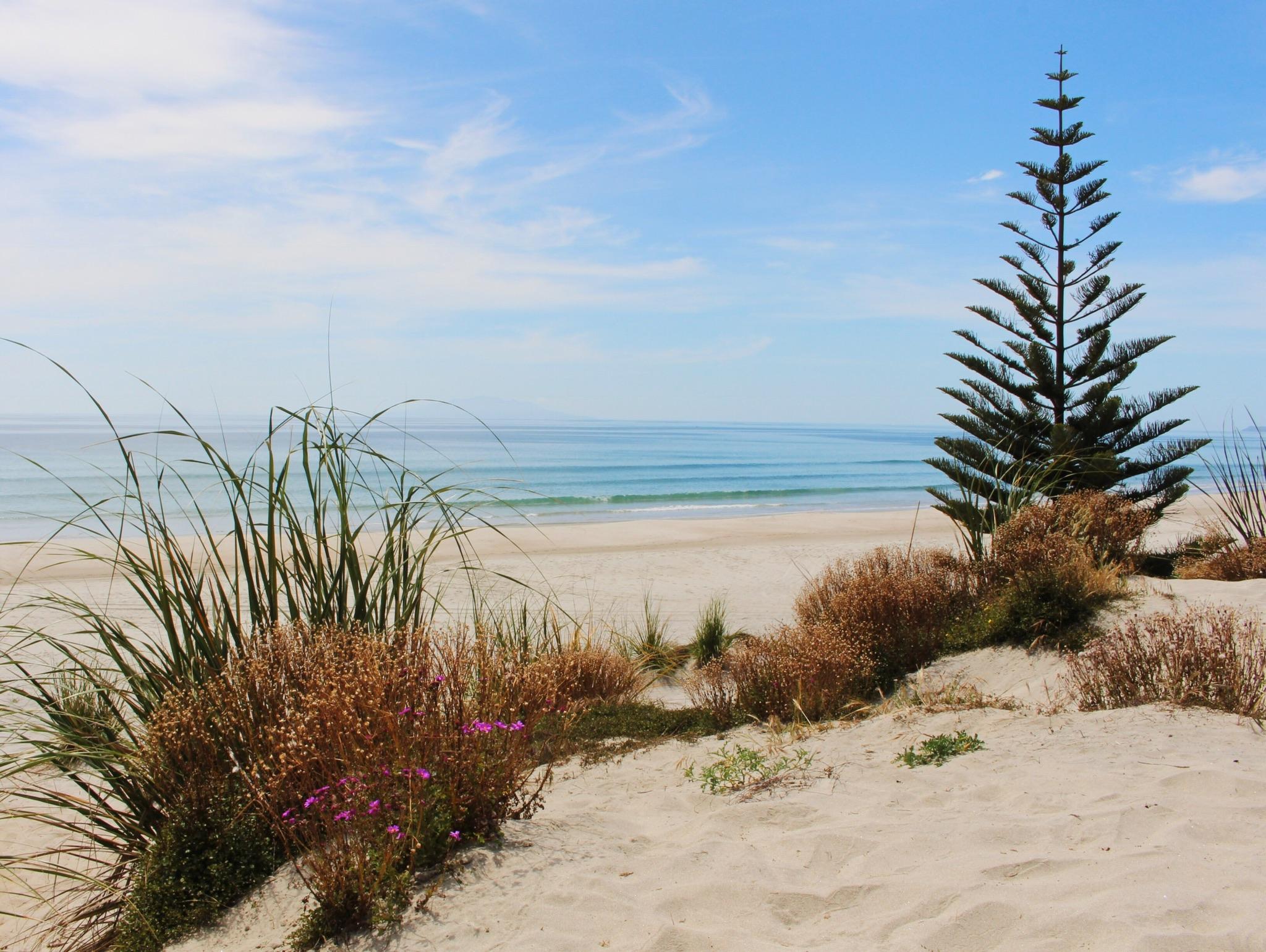 Mangawhai Te Arai beach