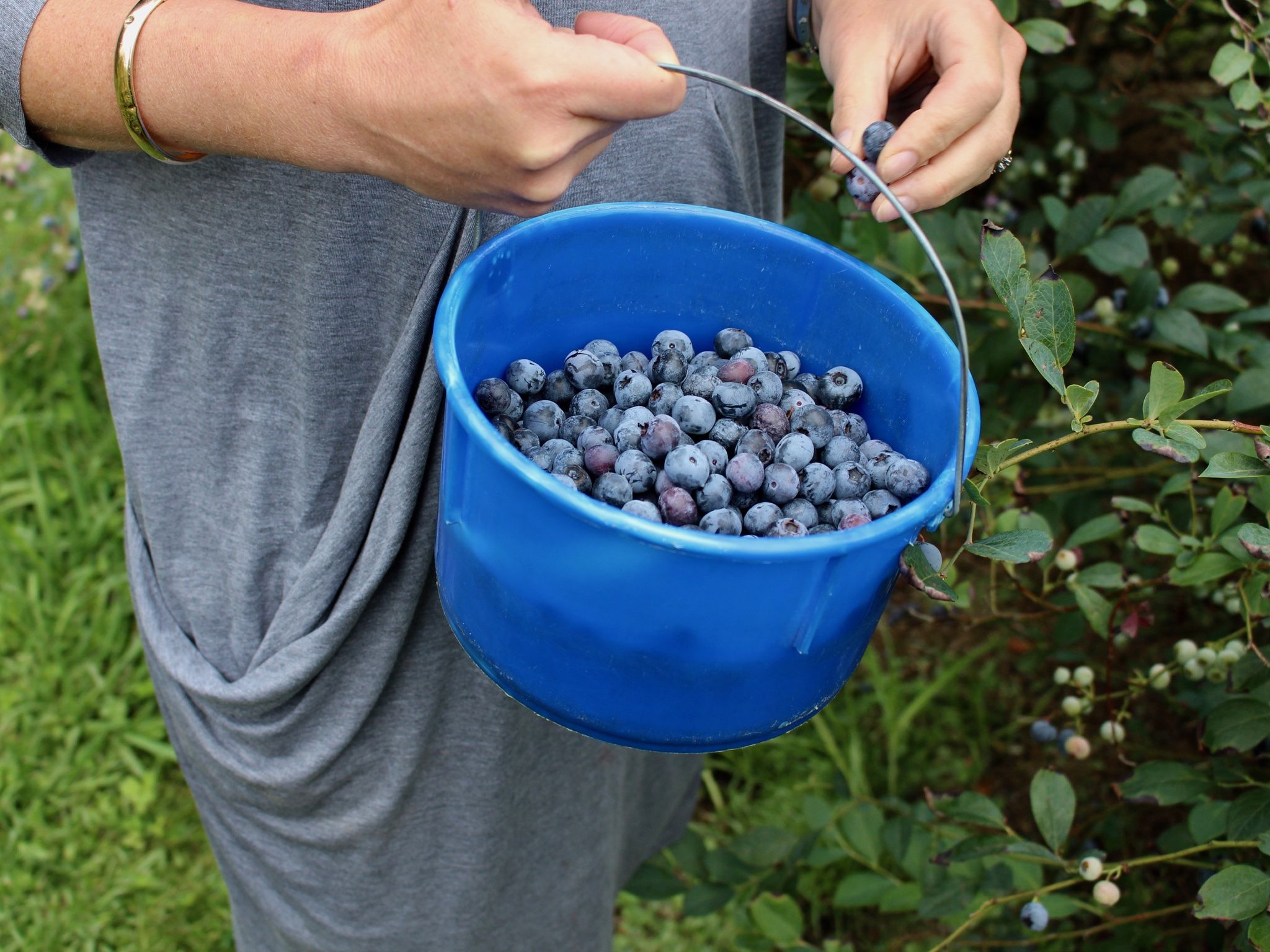 Pleasant Valley Blueberries