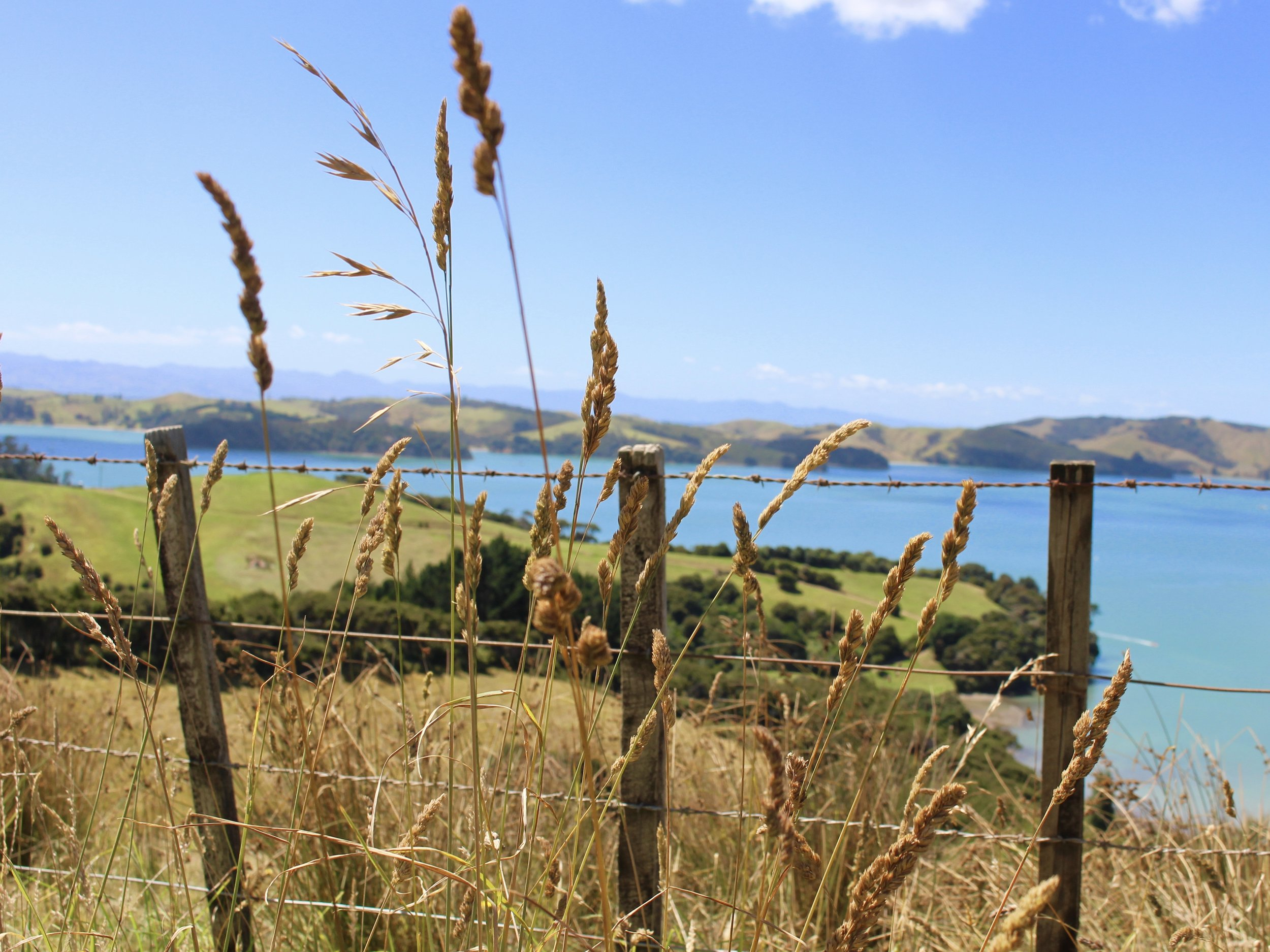 Waiheke food trail