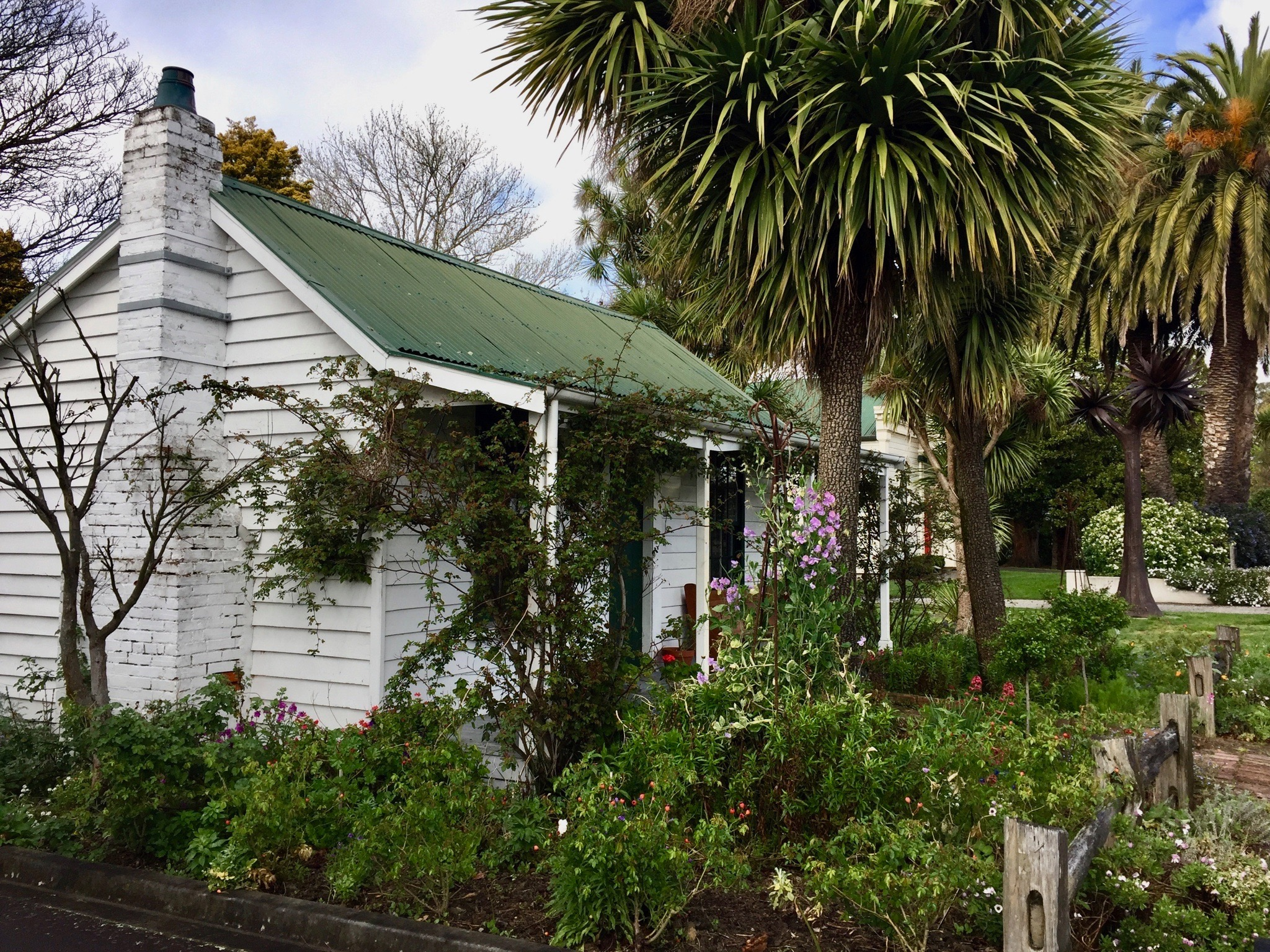 Kouka, cabbage tree, cottage, Greytown