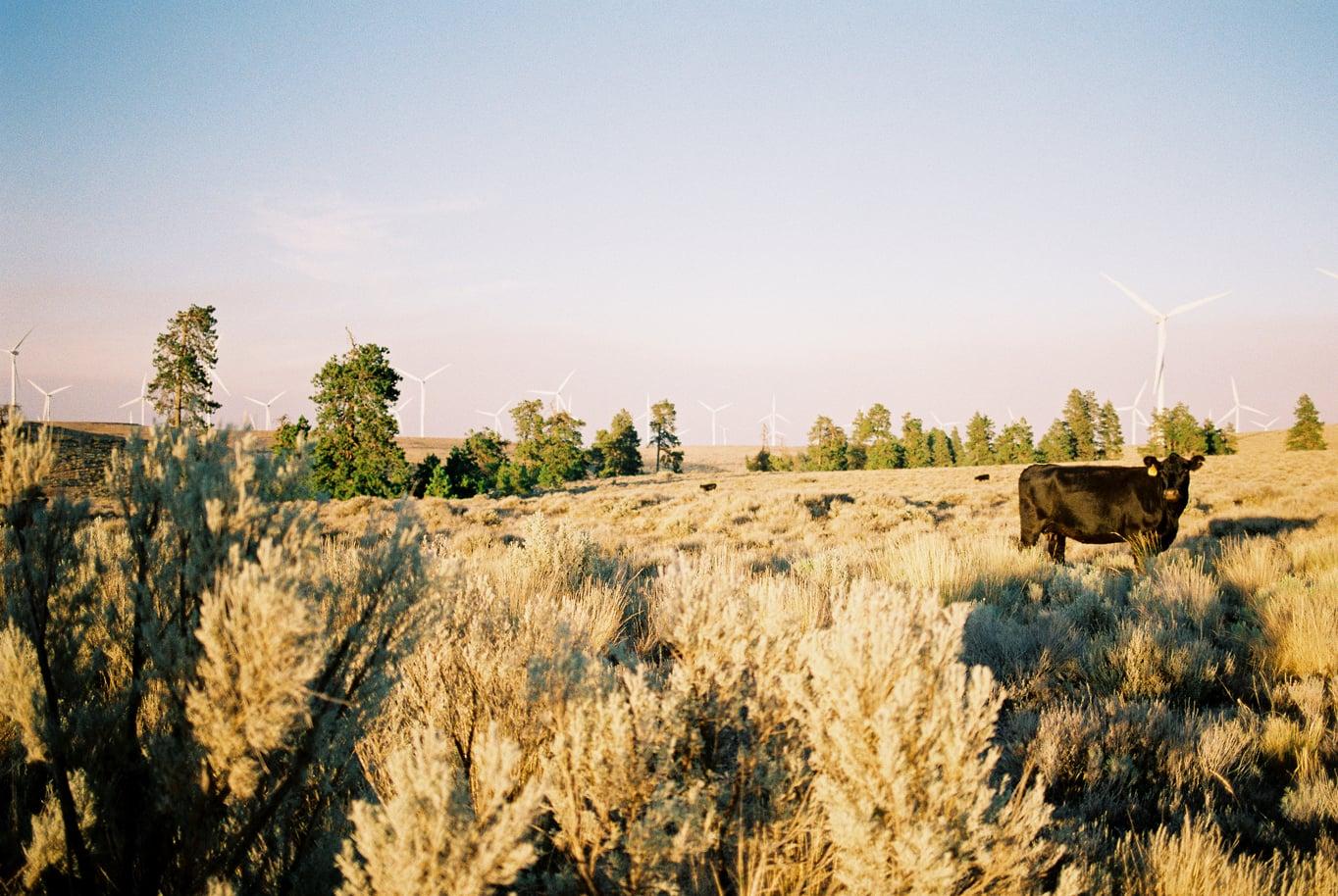 Wild Horse Wind Farm in Vantage, Washington