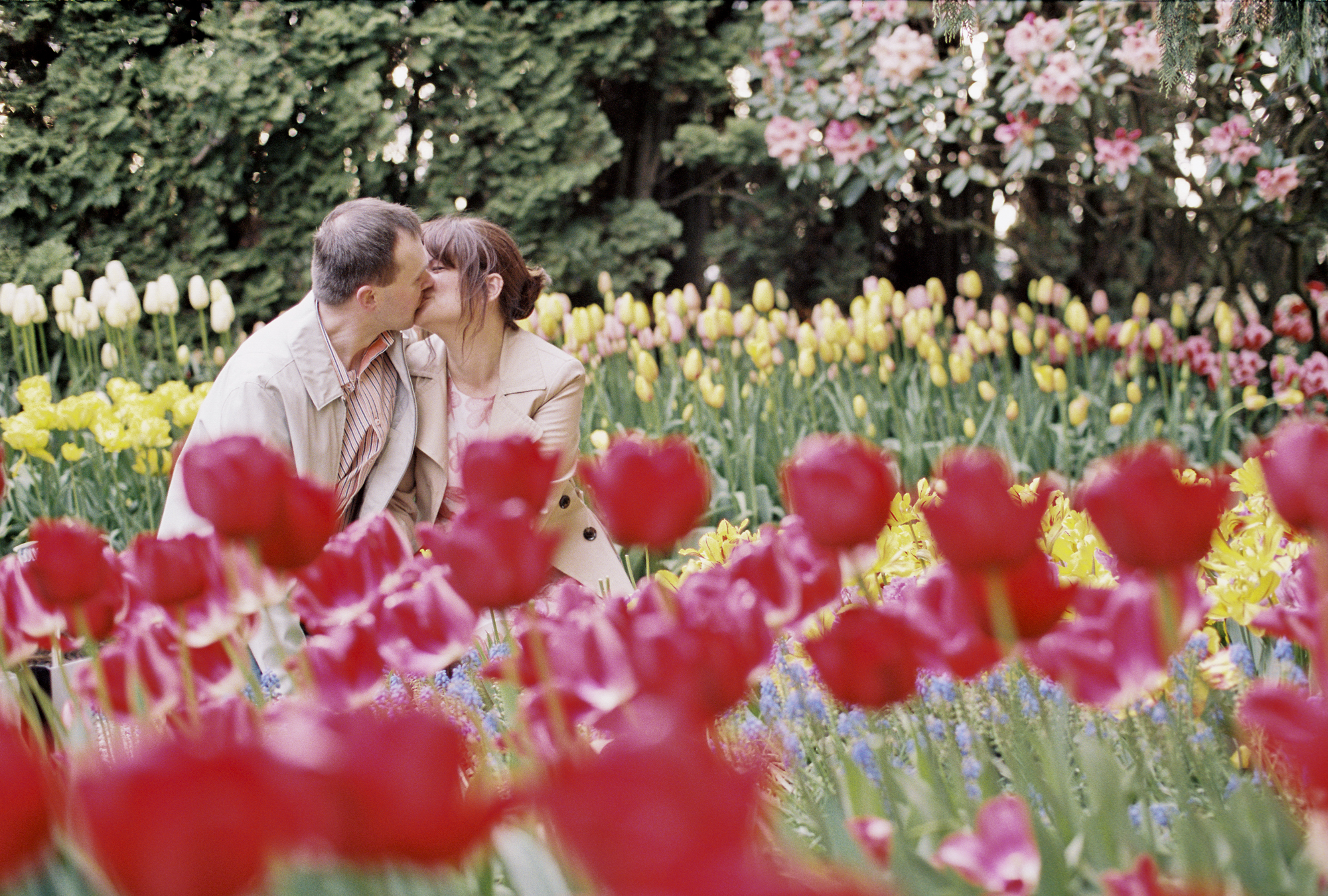 Colorful tulip engagement session at Roozengarde in the Skagit Valley