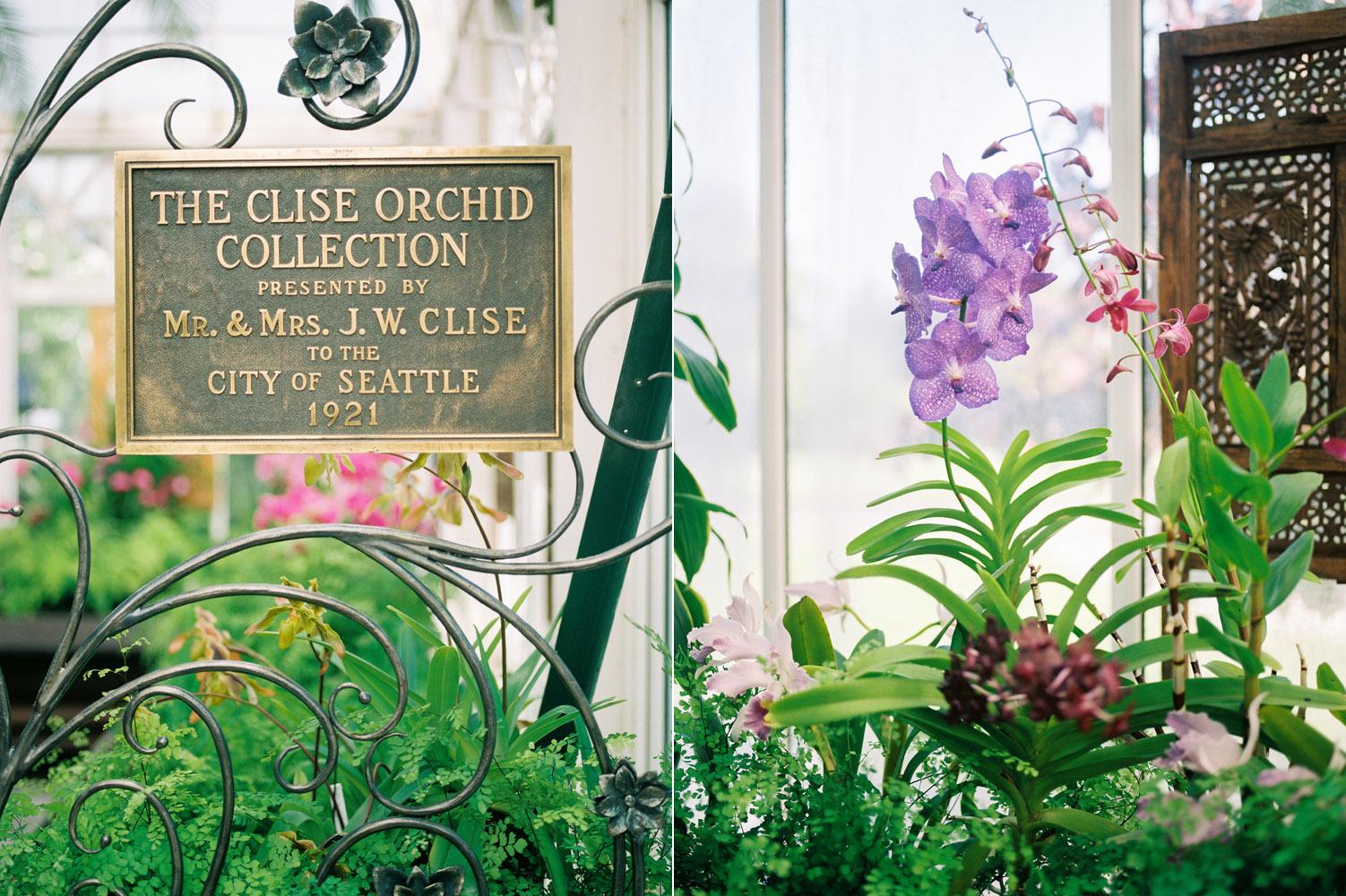 seattle volunteer park conservatory orchid garden kodak portra 800 film.jpg