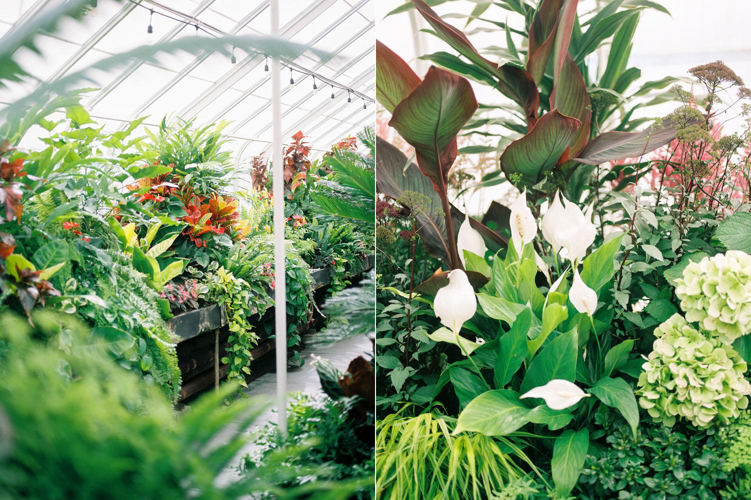 seattle volunteer park conservatory plants.jpg