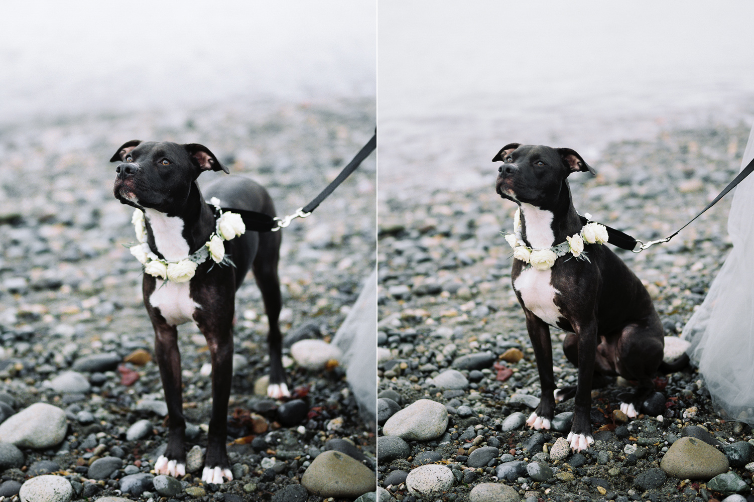 Floral dog collar custom made by Smashing Petals.jpg