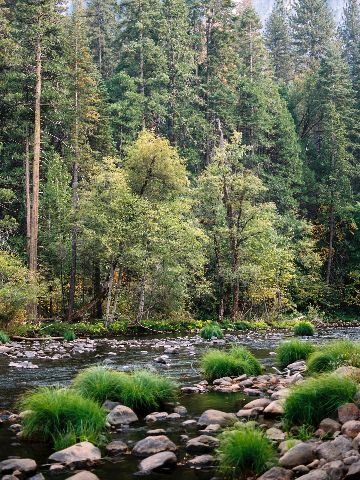 yosemite national park merced river yosemite valley photography on film.jpg