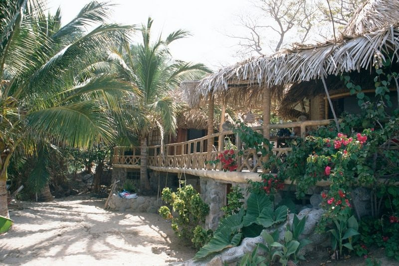 Our Jungle Home by the Sea