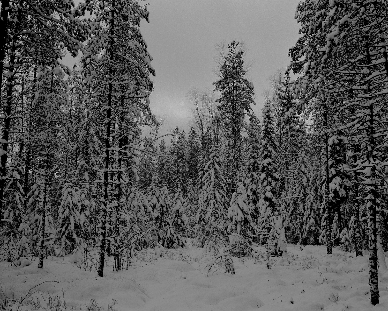 The Eye of the Swamp. Seitseminen, Finland, 2017.