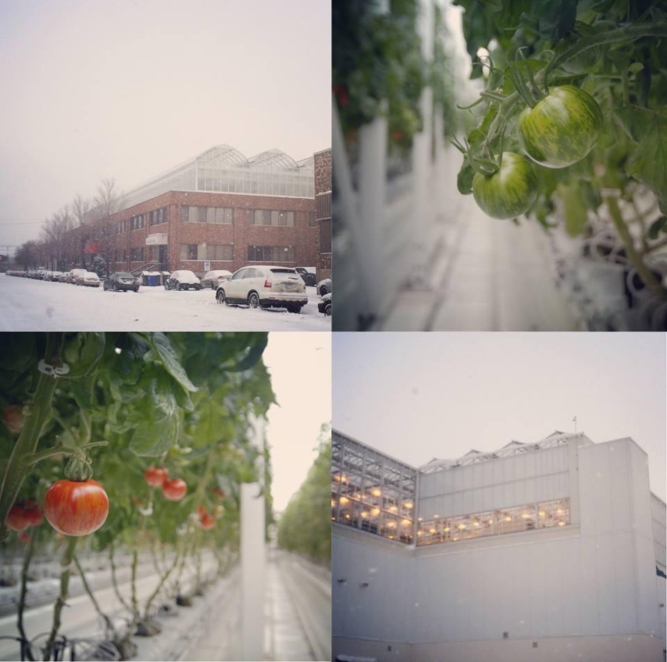 Lufa Farms' greenhouses in winter. Credit: Lufa Farms
