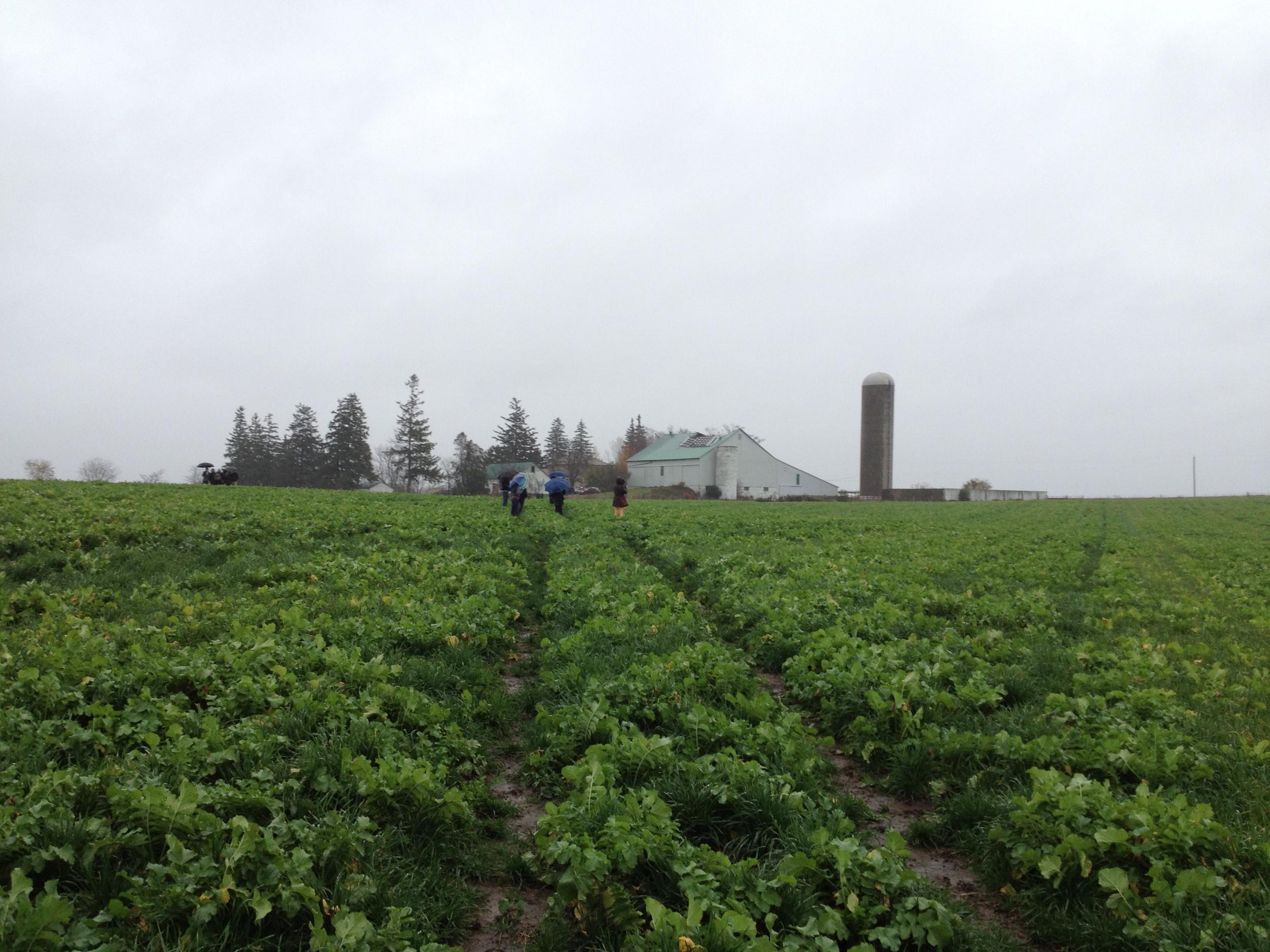 Keeping productive farmland in Waterloo Region