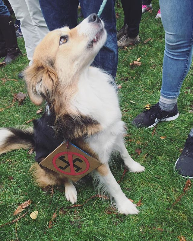Also spotted: an anti-fascist pupper. #strongertogether