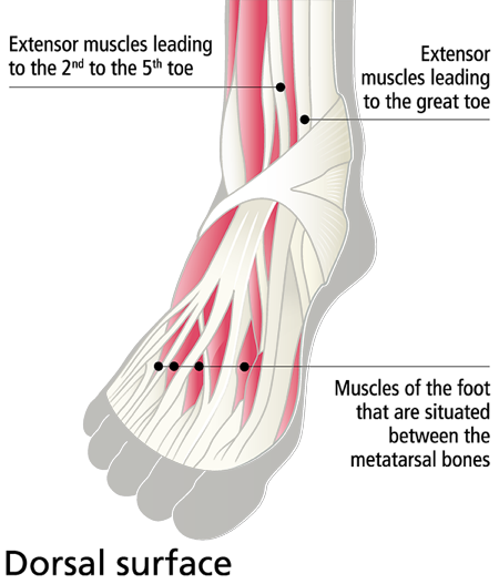 Anatomy Of Feet And How To Care For Them Mavala Switzerland