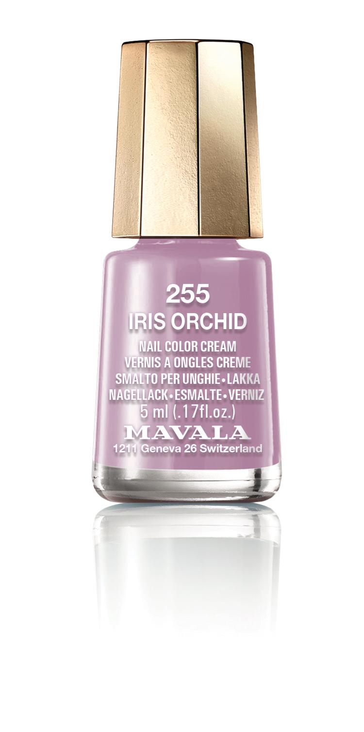 255 IRIS ORCHID
