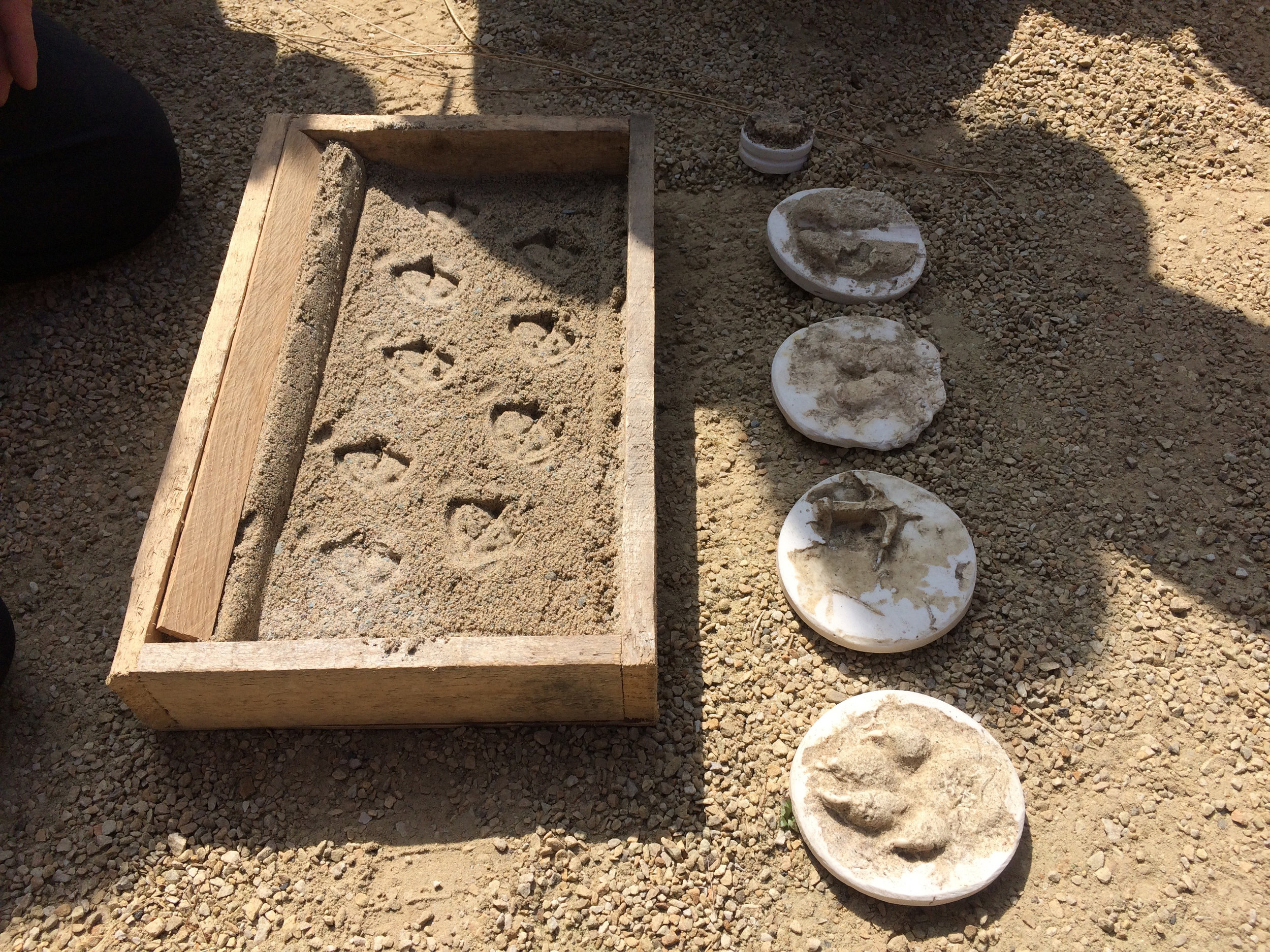 Superfolk had made casts of the animal prints they found close to their studio in Mayo. They used these to make animal prints in sand, and hid them throughout the garden for the children to discover....