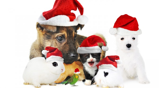 Monster Pet Vet would like to wish everyone Happy Holidays!!            Image:CannonLinux