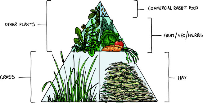 rabbit diet pyramid.jpg
