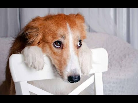 apologetic looking dog.jpg