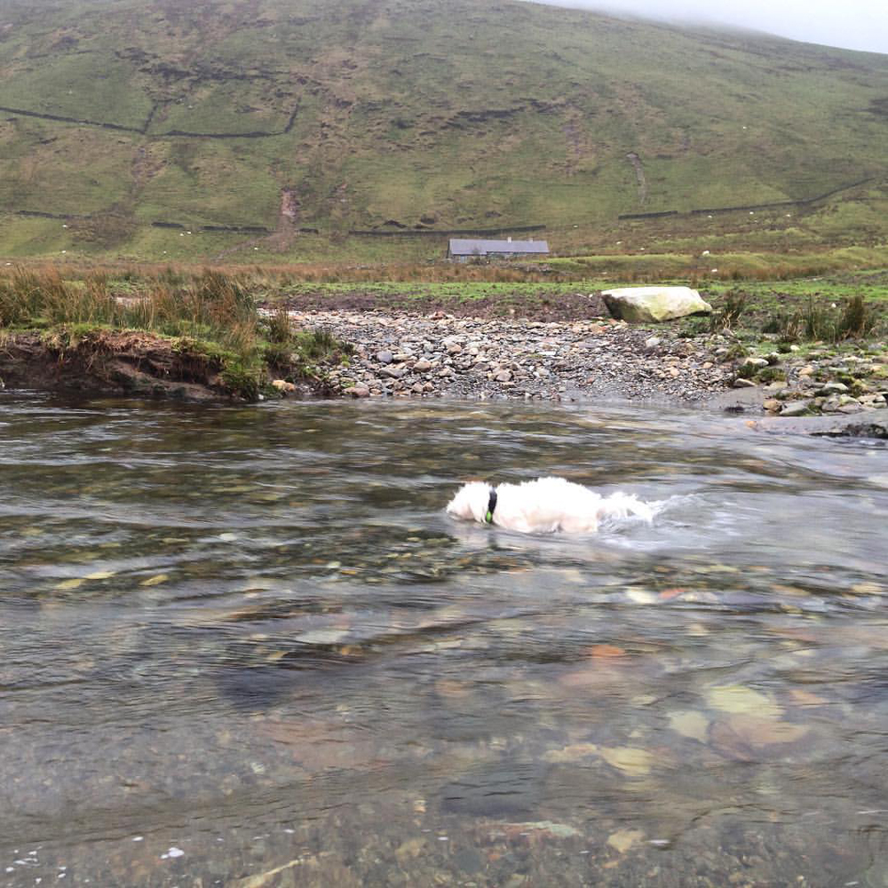 Our little watchdog fishing in the stream