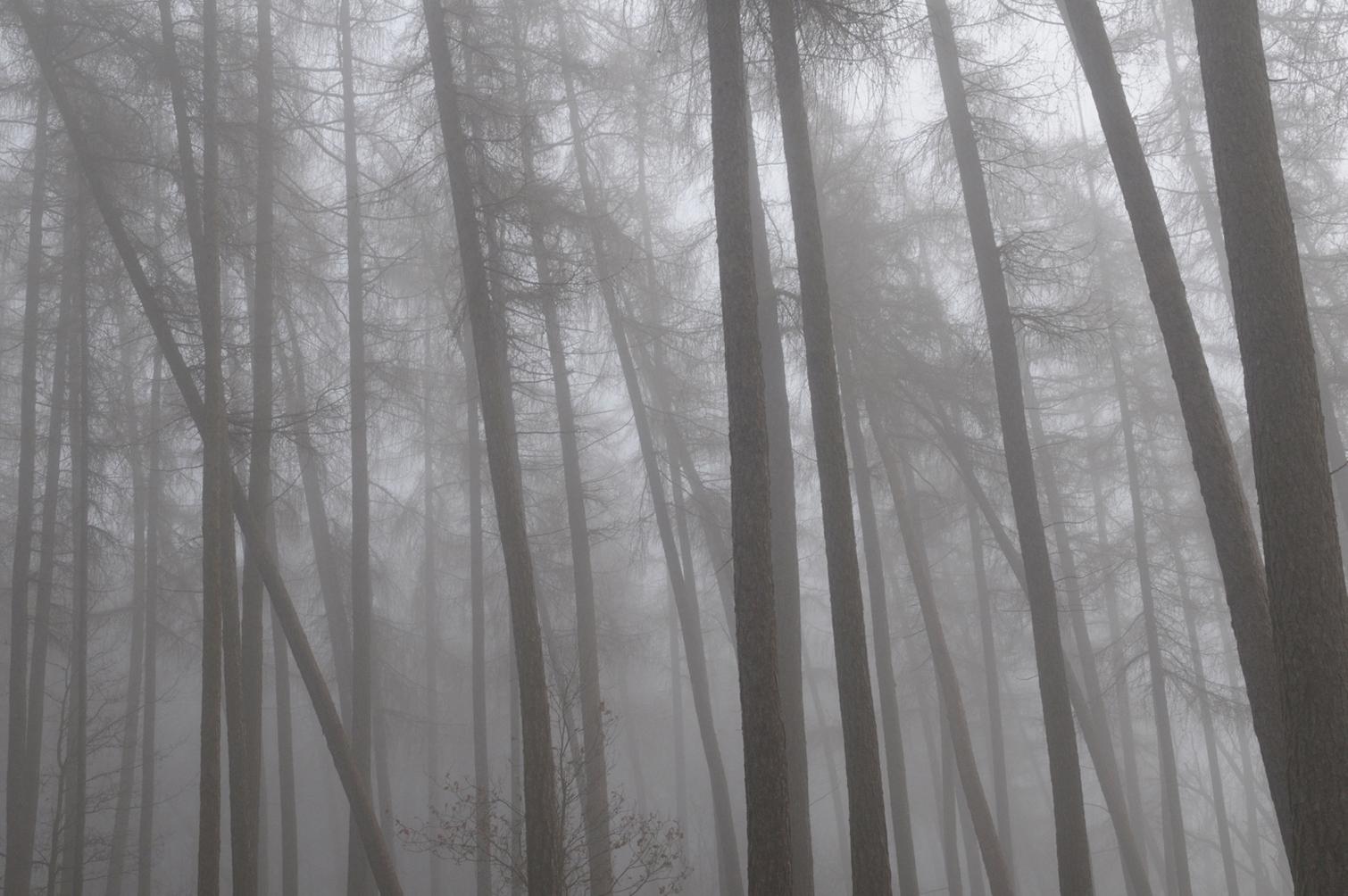 Redgrove_2Fog_Trees.jpg