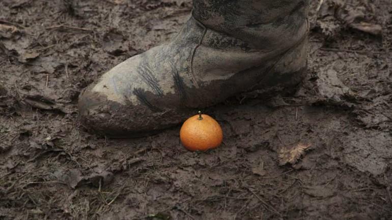 Tangerines image seven.jpg