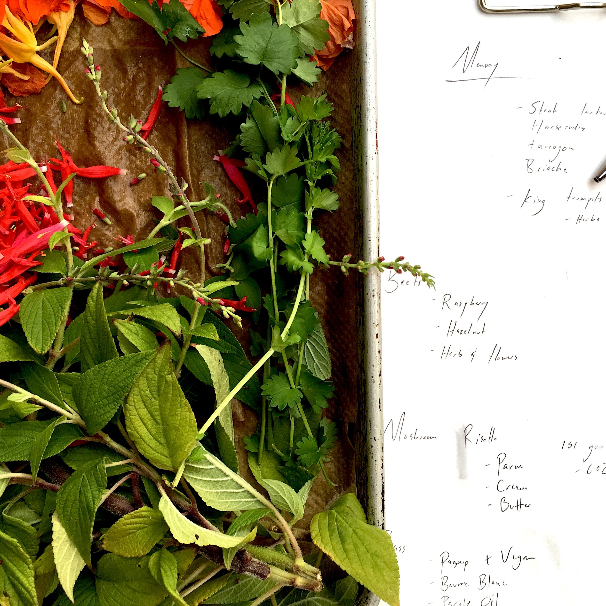 Herbs and List - Cookhouse.JPG