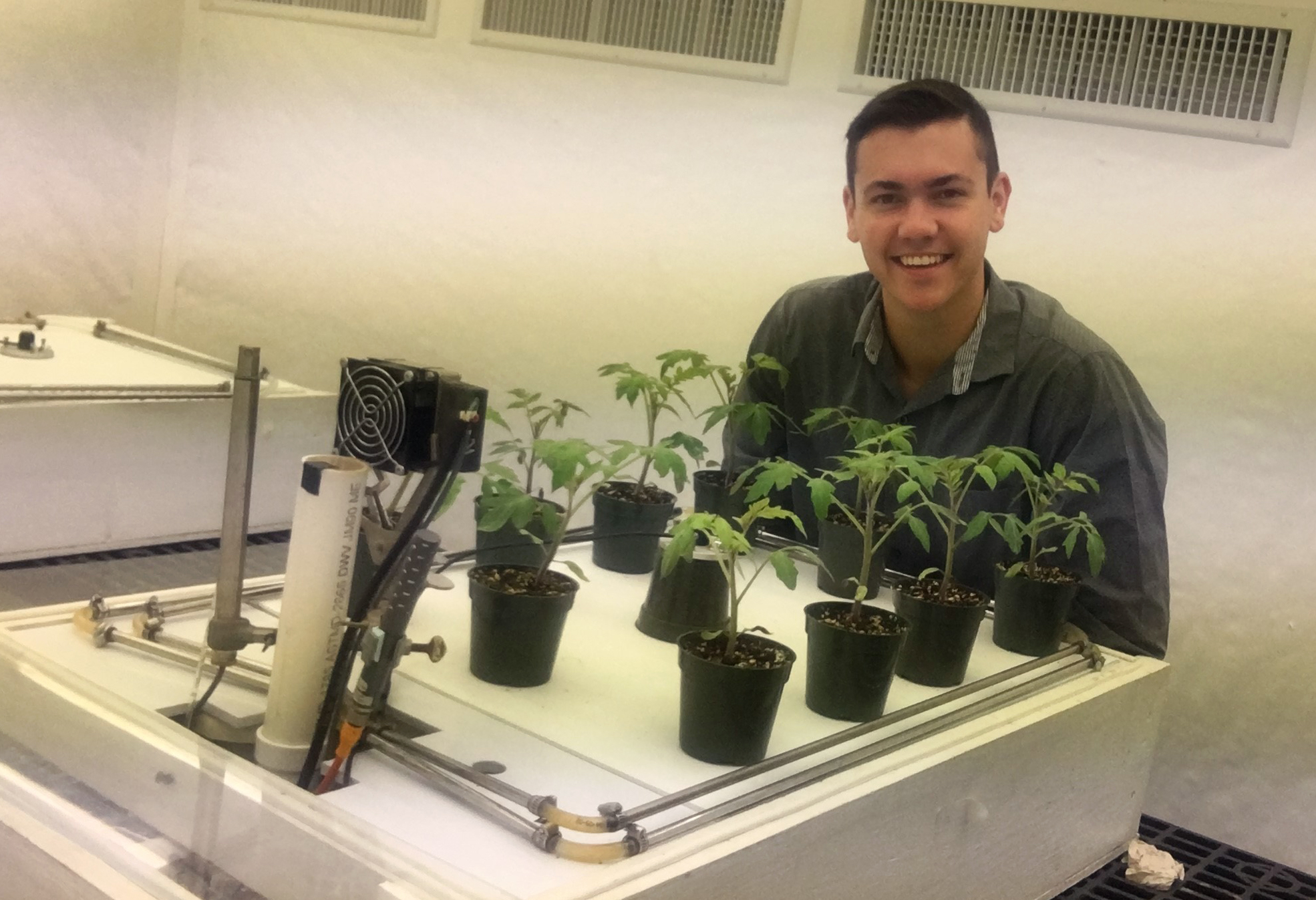 Dylan Kovach displays the tomato plants he is monitoring in his lab at Cornell University. PHOTO COURTESY DYLAN KOVACH