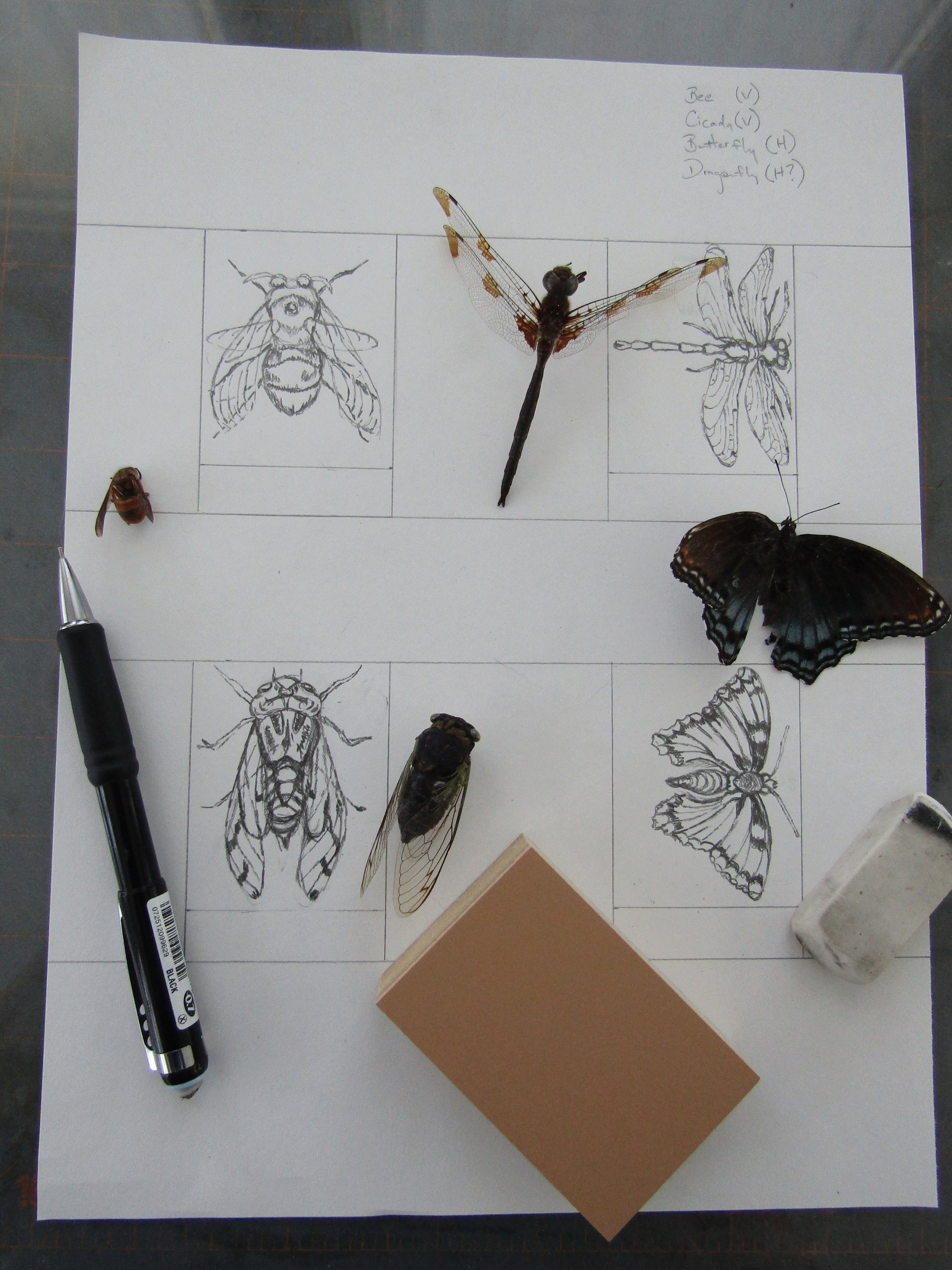 Drawing images for the relief prints.