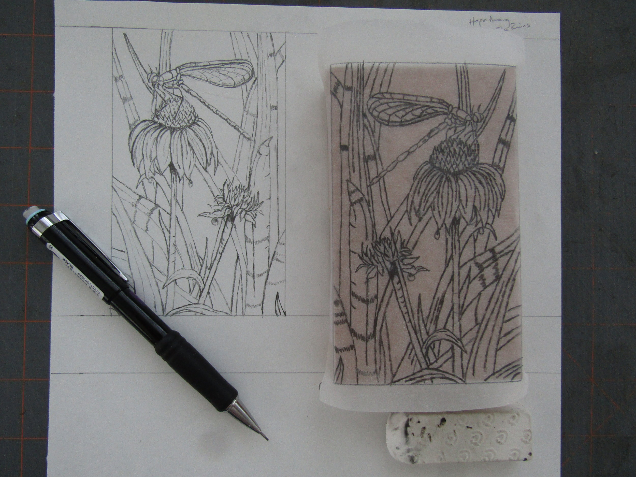 Transferring the drawing to a linoleum block. Photographs I took of my gardens were the sources for the drawings.