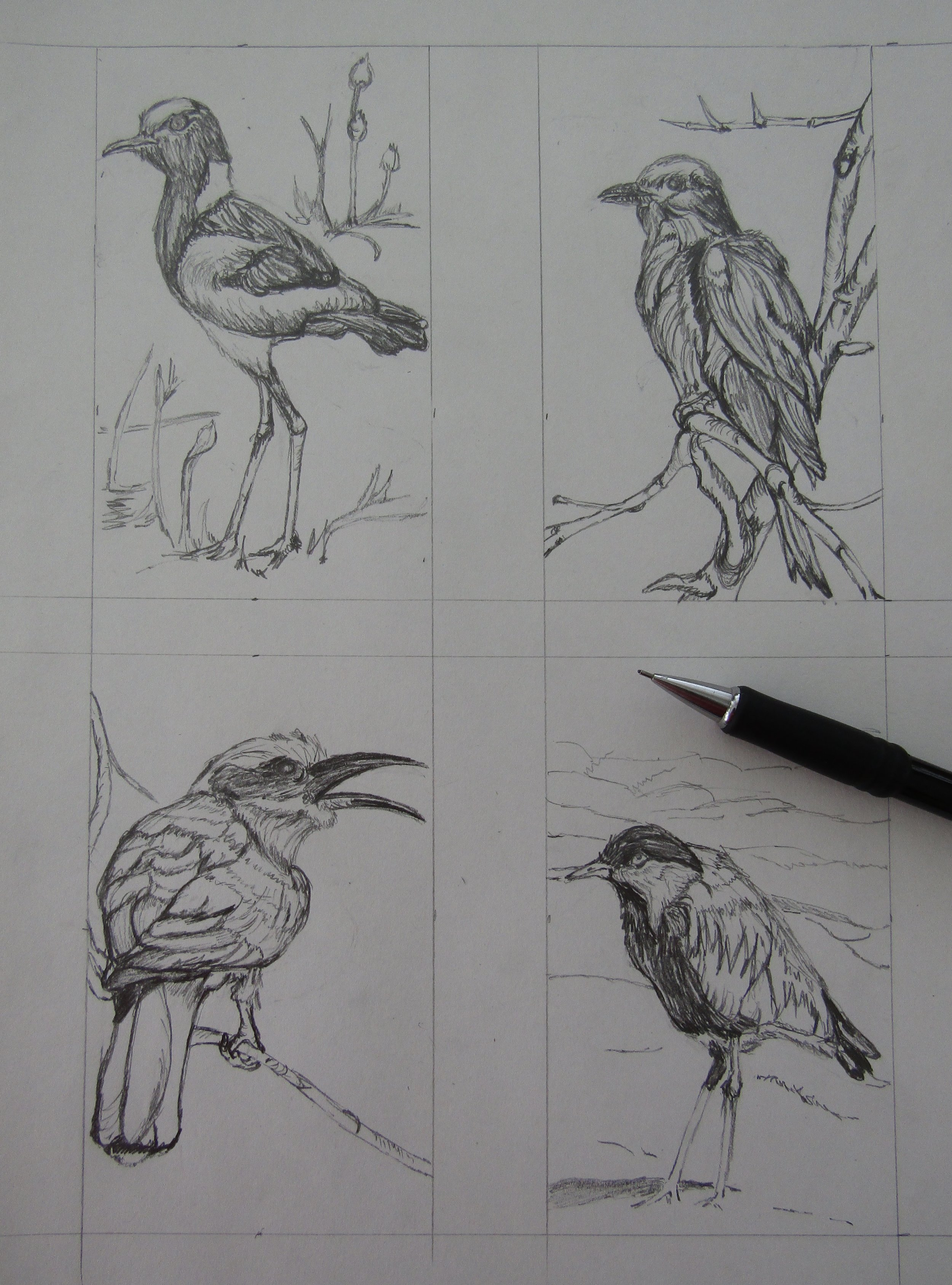 The numerous birds I saw inspired these drawings.