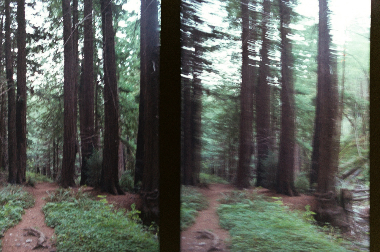 Blurry morning trails at Limekiln by  Lon.