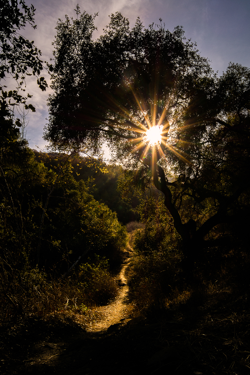 Topanga Canyon Hiking Trail_Sunburst Through Oak Tree