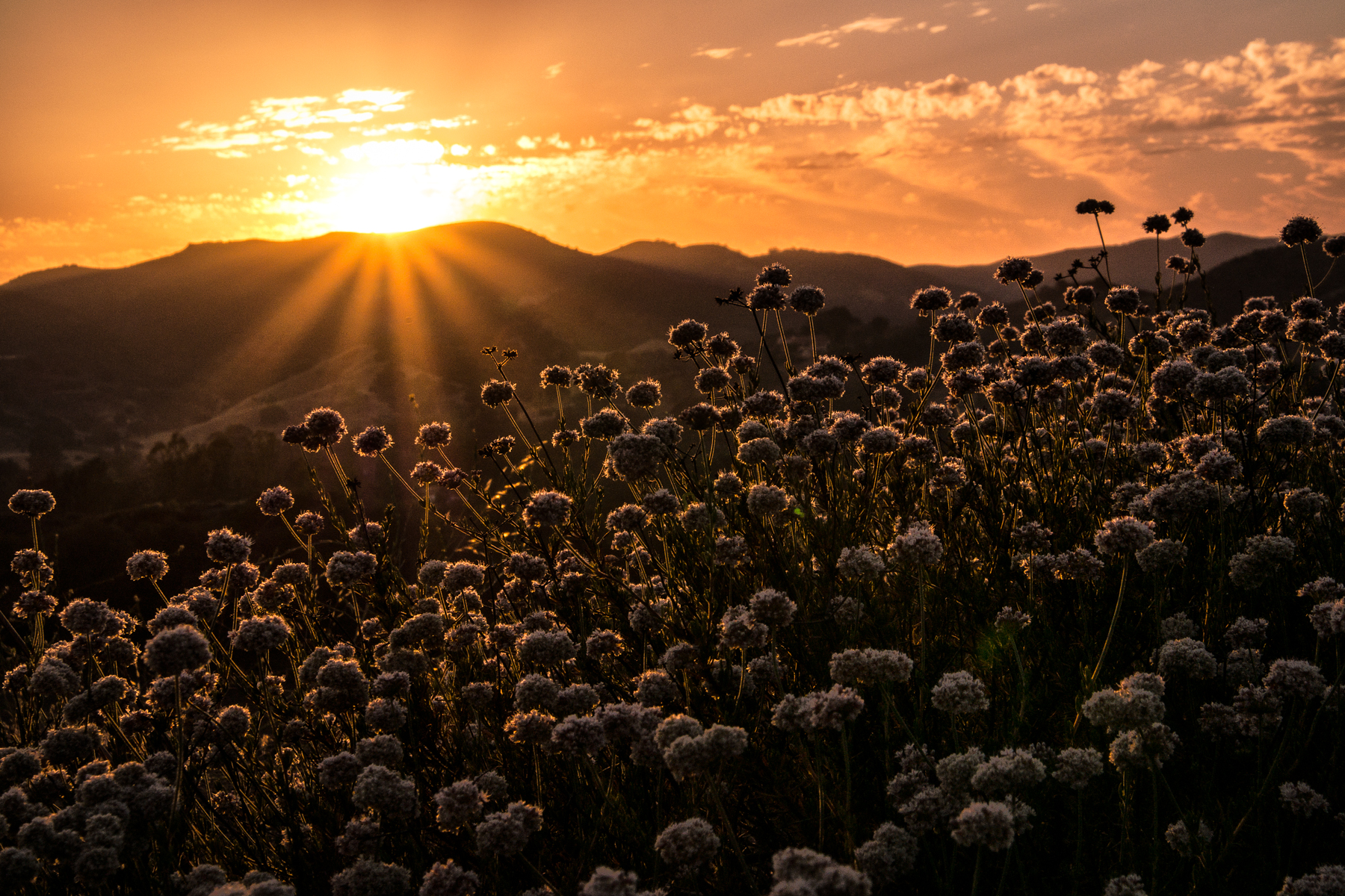 Wasim Muklashy Photography_Summer Solstice_Sunset_062114_Agoura Hills_California_Samsung NX30