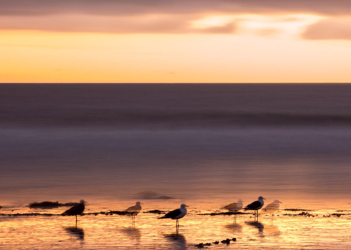 Wasim-Muklashy-Photography_Samsung-NX1_18-200mm_112214_Malibu_California_-SAM_0037_1800px.jpg